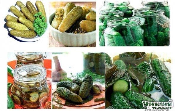 14 лучших рецептов огурцов на